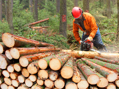 The Lumberjack working in a forest.